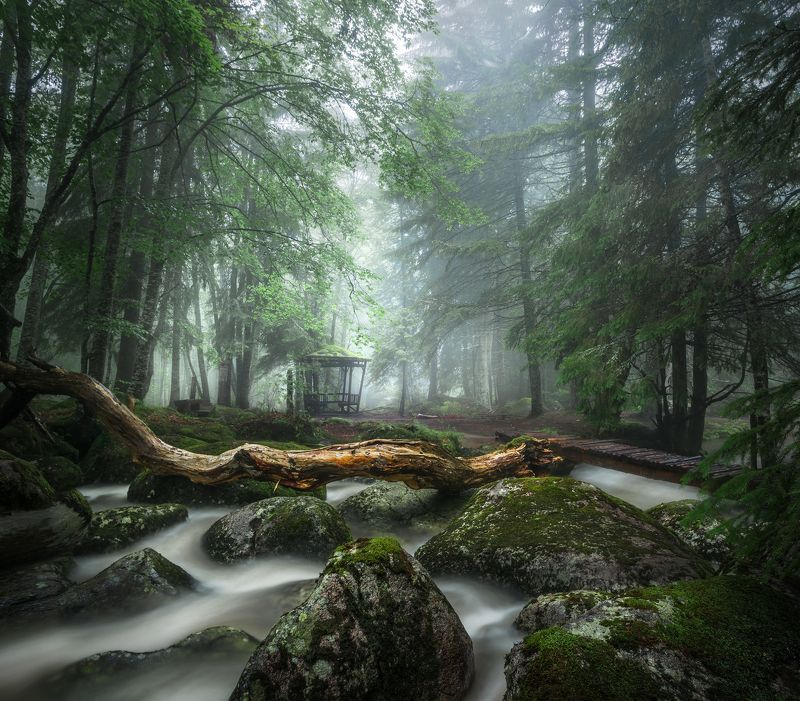 landscape, nature, scenery, forest, wood, autumn, mist, misty, fog, foggy, river, longexposure, mountain, rocks, vitosha, bulgaria, туман, лес, oсень There in the white veil / Там в белой вуалиphoto preview
