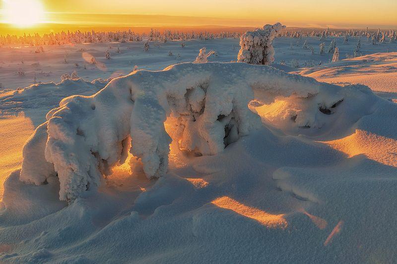 лапландия, Финляндия, пейзаж, природа, tykky, закат Снежные фигуры в парке Riisitunturi -2. photo preview