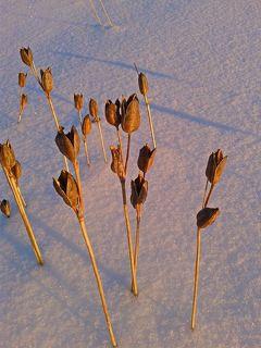 Букет от осени зиме.