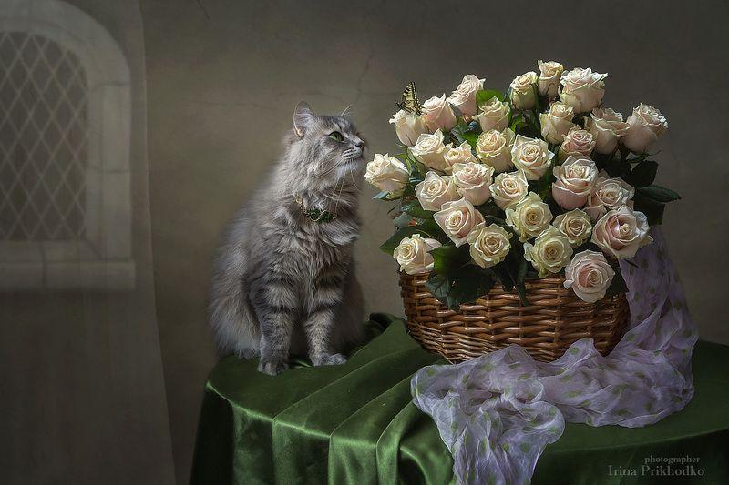 домашние животные, кошка Масяня, корзина розовых роз, натюрморт, бабочка Пушистая наблюдательницаphoto preview