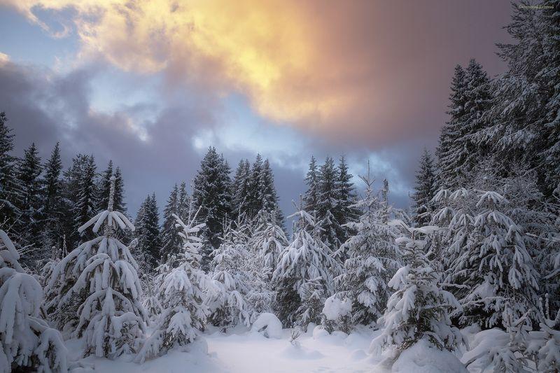 зима, снег, лес, сосны, мороз, снегопад, закат Просвет в зимннем небеphoto preview