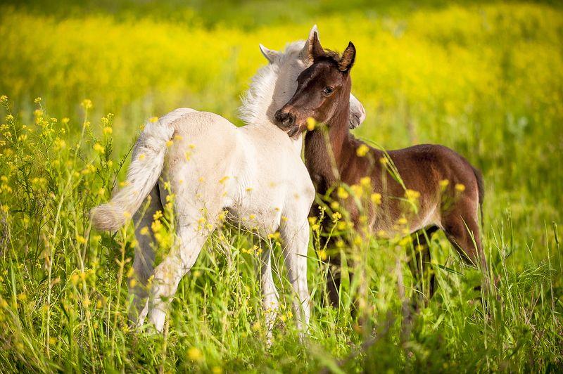 казахстан, алтын-эмель, весна, лошади, суслик, жеребята, растения, маки, закат, или, река или, Веснаphoto preview