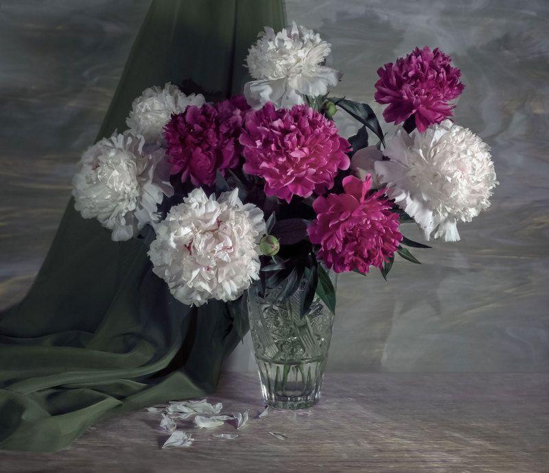 натюрморт, цветы, пионы Пионыphoto preview