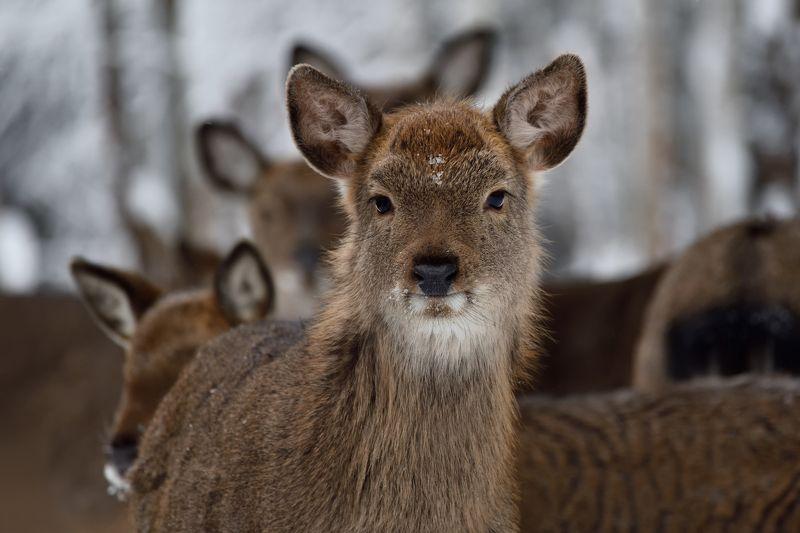 зима,лес,олени ***photo preview