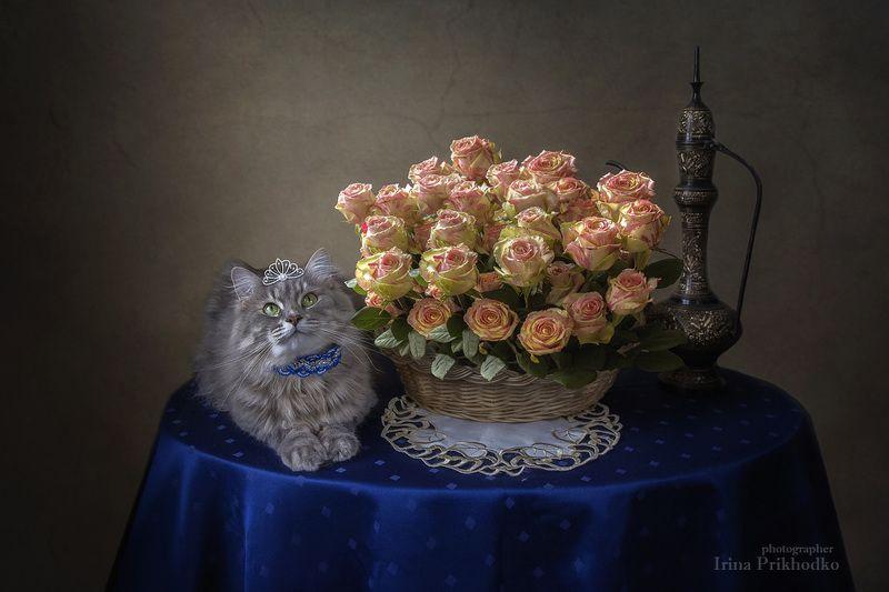домашние животные, кошка Масяня, котонатюрморт, котомодель, корзина роз, цветочный натюрморт Маленькая принцессаphoto preview