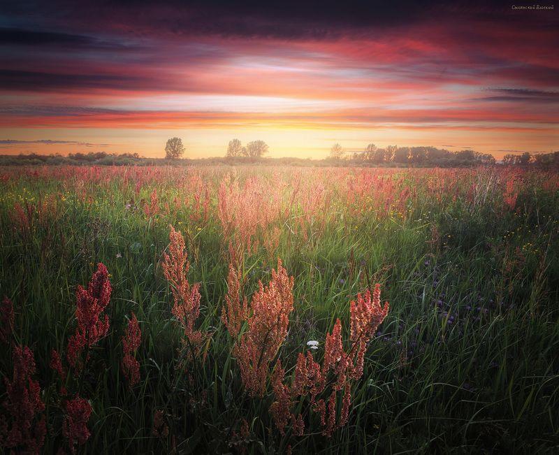 закат, лето, поле, луг, конский щавель, трава малиновый закатphoto preview