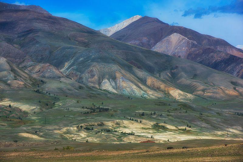 алтай Почти Монгольский Алтайphoto preview