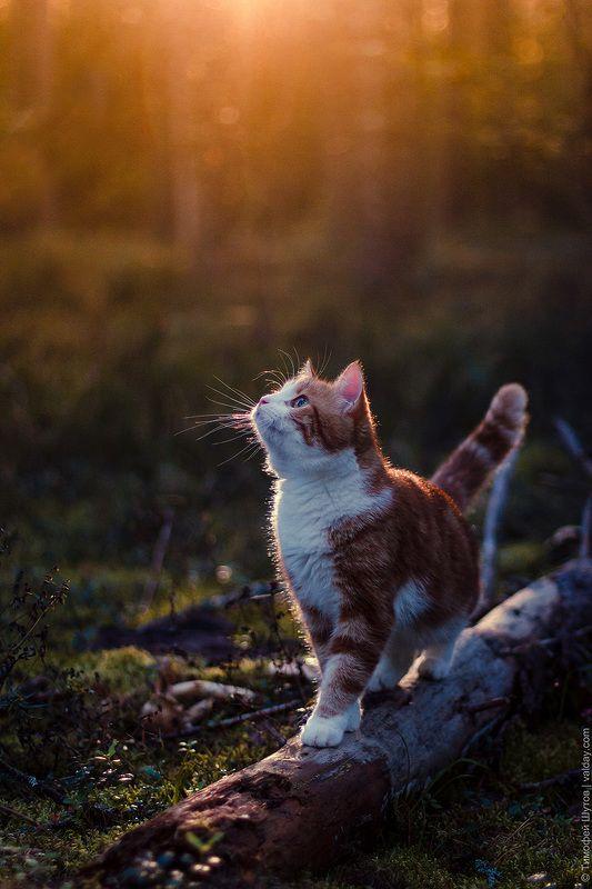 валдай Осенняя прогулка по Валдайскому лесуphoto preview