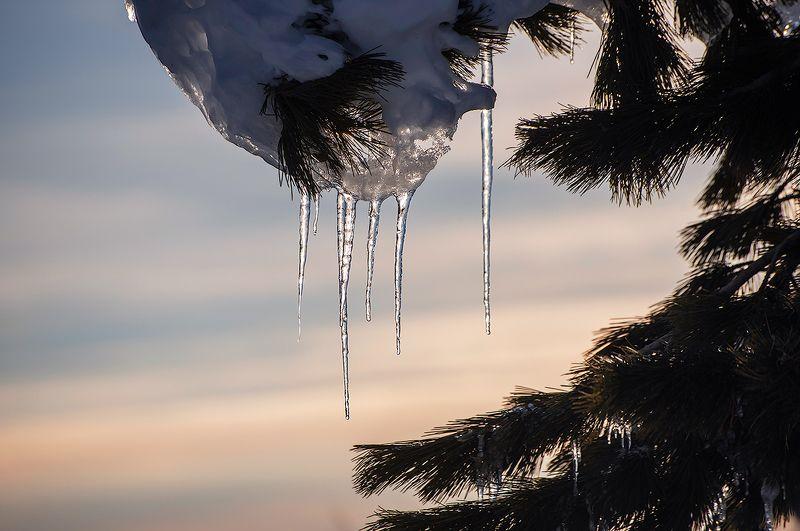 сосульки, гора, зелёная, курган, шерегеш, горная шория, сибирь, зима, вечер Pro зимние сосульки (1)photo preview