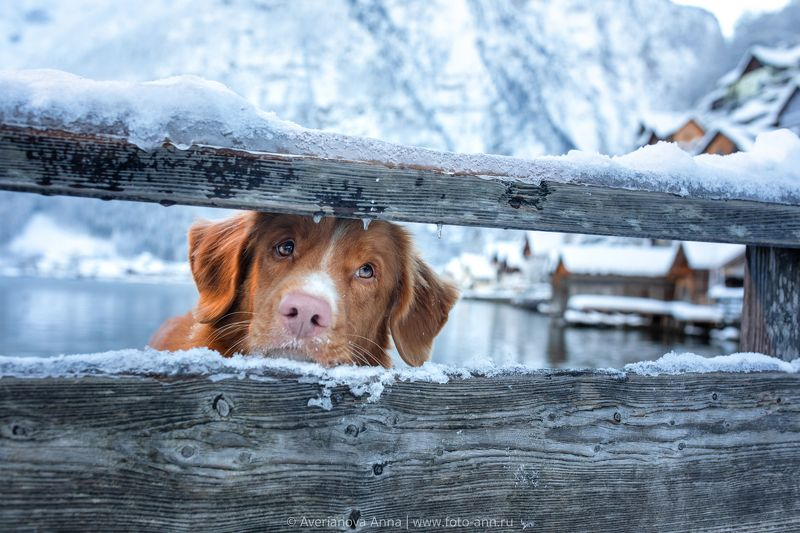 собака, милое, природа в ожидании весныphoto preview