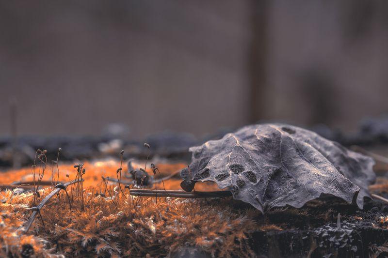 Природа, лес, растения, мох, лишайники, макропейзаж, макро, опавший лист, Макропейзажphoto preview