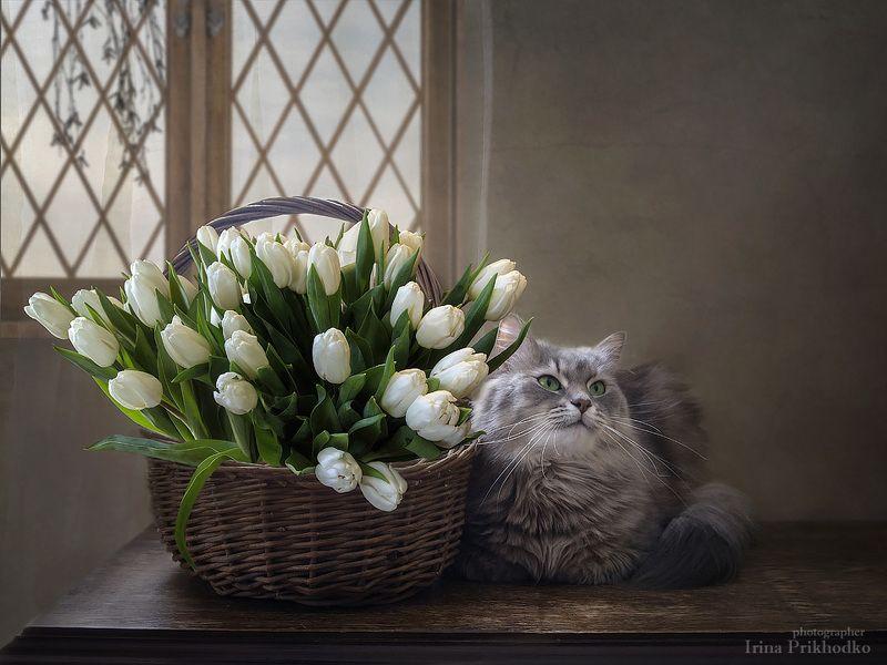 натюрморт, цветочный натюрморт, котонатюрморт, кошка Масяня, корзина тюльпанов - Скоро весна, знаете ли!photo preview