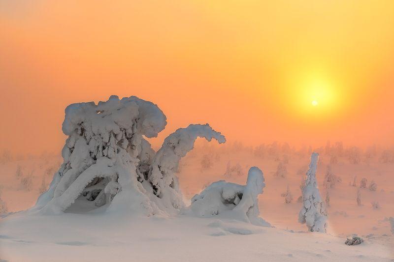 природа, пейзаж, зима, деревья Закат в зимнем лесуphoto preview