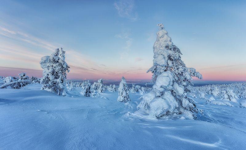 снег, горы, ели, кандалакша. photo preview