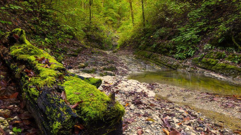 Тишина на речке Каменистойphoto preview