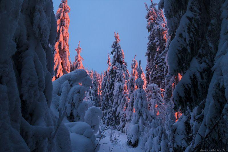 горы, гори, Закарпаття, зима, Карпати, Свидовець, лопухів, лопухов, свидовец, карпаты, закарпатье, свет, закат, солнце, яркий Брызнуло сумеречным краснымphoto preview