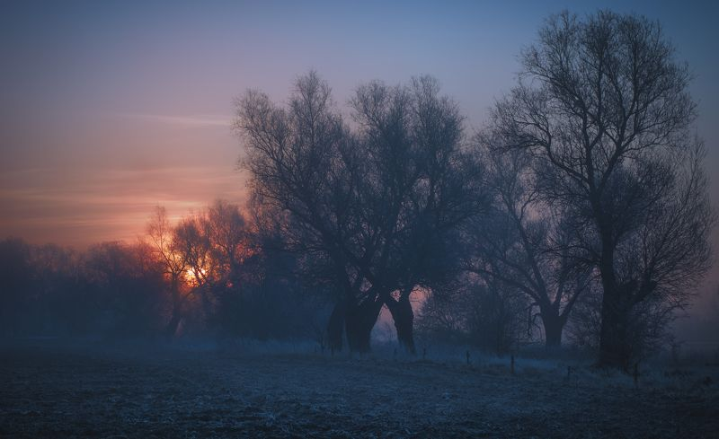 daybreak,fog,trees,nature,nikon,sky,clouds,sun,winternlandscape,mist,dawn,light,sunrise, The awakeningphoto preview