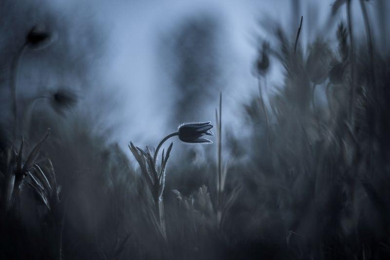 Даурская ночь...photo preview