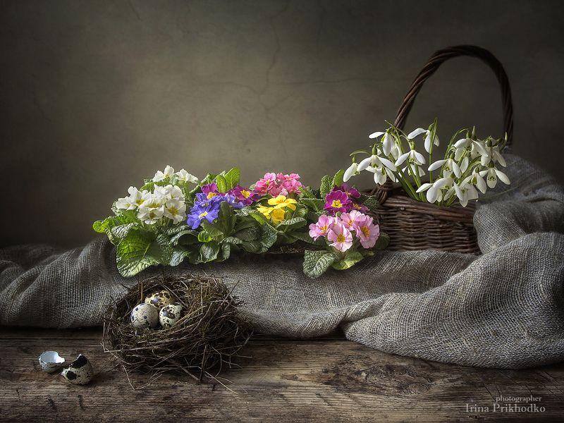 натюрморт, весна, весенние первоцветы, птичье гнездо, перепелиные яйца, подснежники Натюрморт с весенним настроениемphoto preview