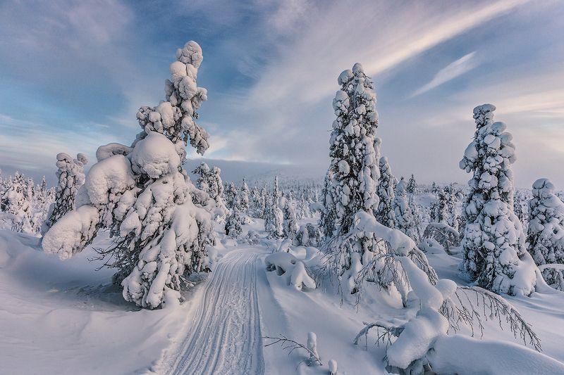 зима, снег, ели, кандалакша ...photo preview