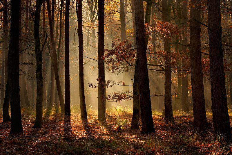 осенний свет autumn light trees dranikowski fall tree magic forest mist a7riii 85mm осенний светphoto preview
