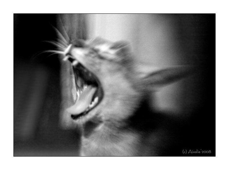 lensbaby, кот, усы, зубы, пасть ***photo preview