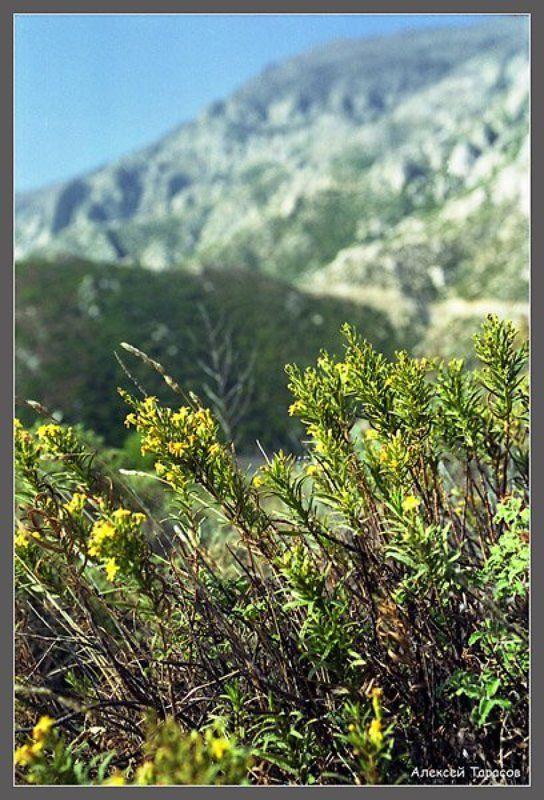 греция, икария, горы,  цветы Цветущееphoto preview