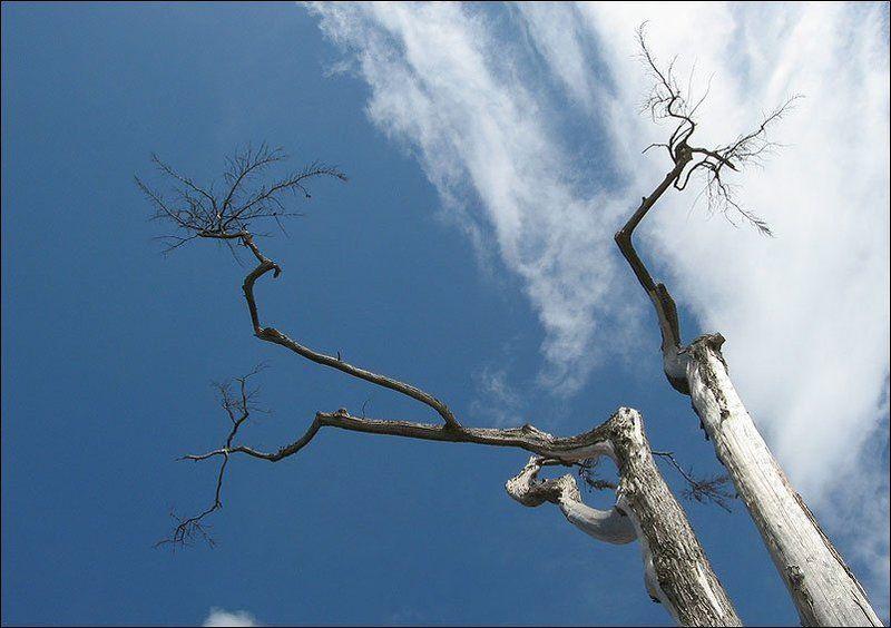 иероглиф, небо, дерево, португалия Вот такой вот иероглиф!photo preview