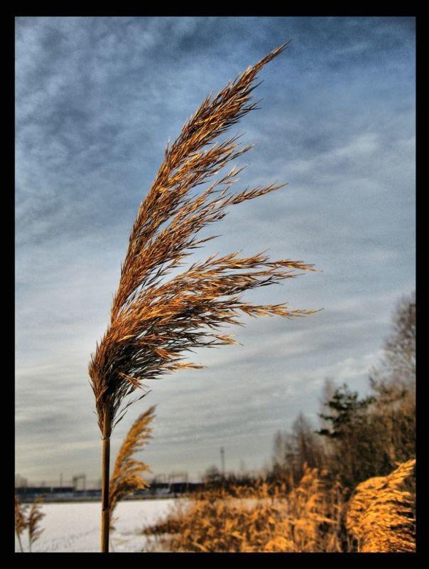 зима,декабрь ***photo preview