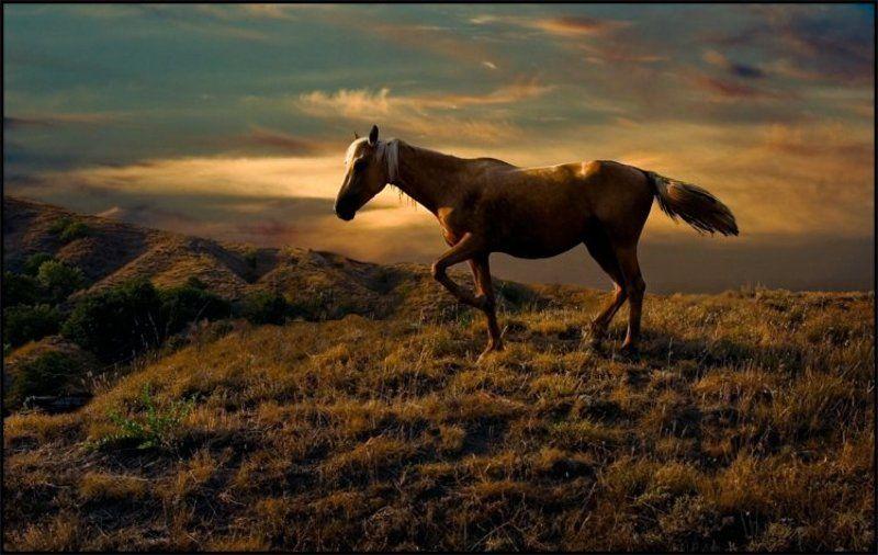 лошадка лошадкаphoto preview