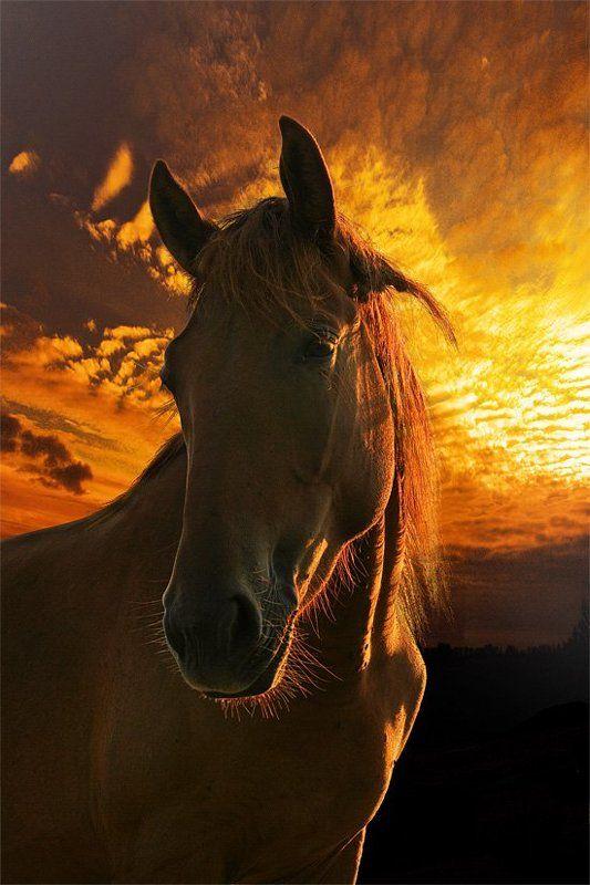 закат, лошадка Огненный портретphoto preview
