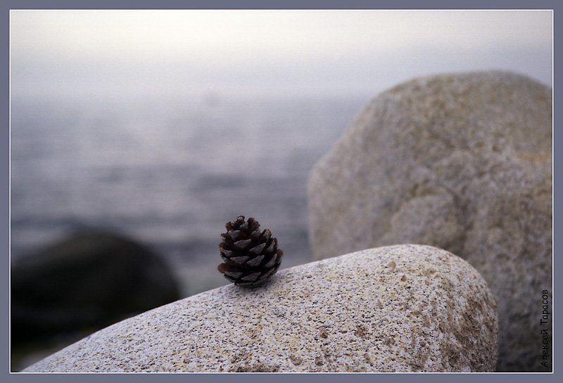 море, камни, шишка Исключение из правилphoto preview