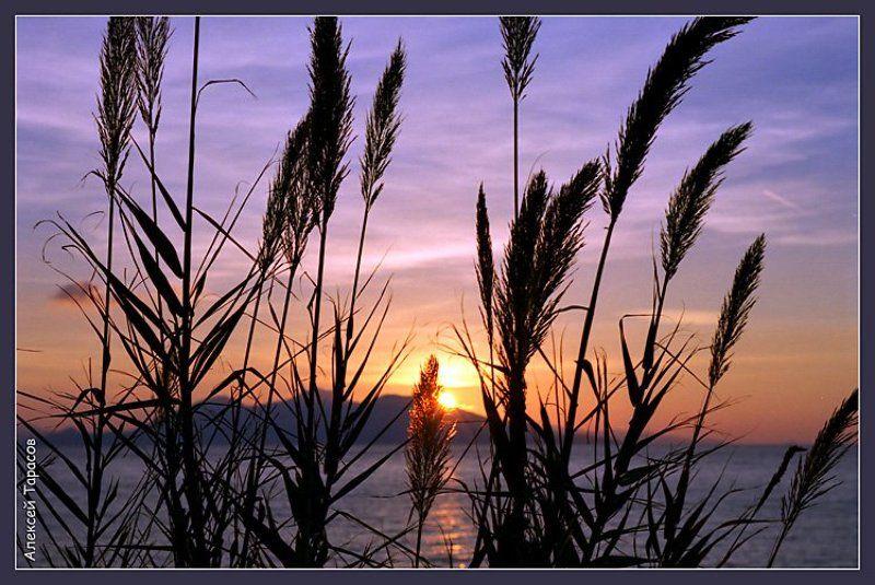 греция, икария, море, рассвет, тростник Тростниковый рассветphoto preview