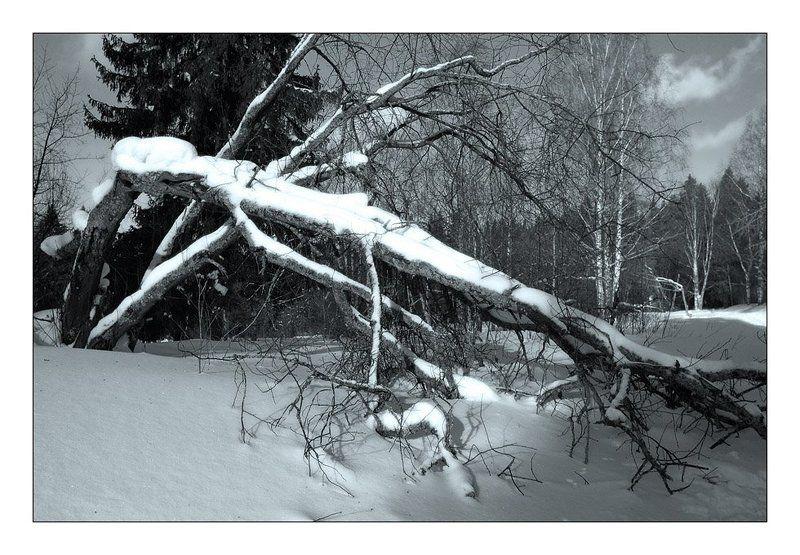 лес, зима, снег, ветвь, дерево photo preview
