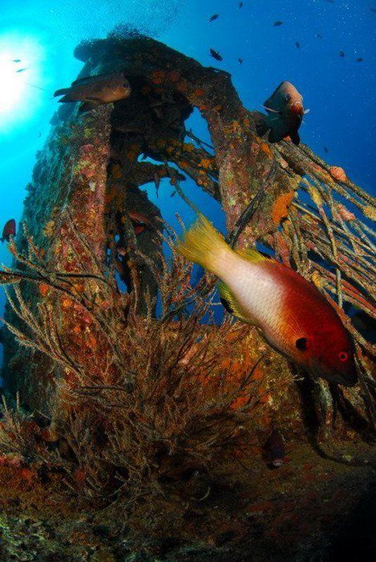 море, рыба,коралл, природа, пейзаж Рэкphoto preview