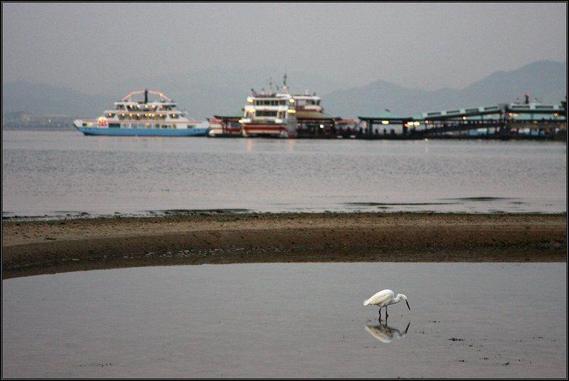 япония, миядзима, море, цапля * * *photo preview