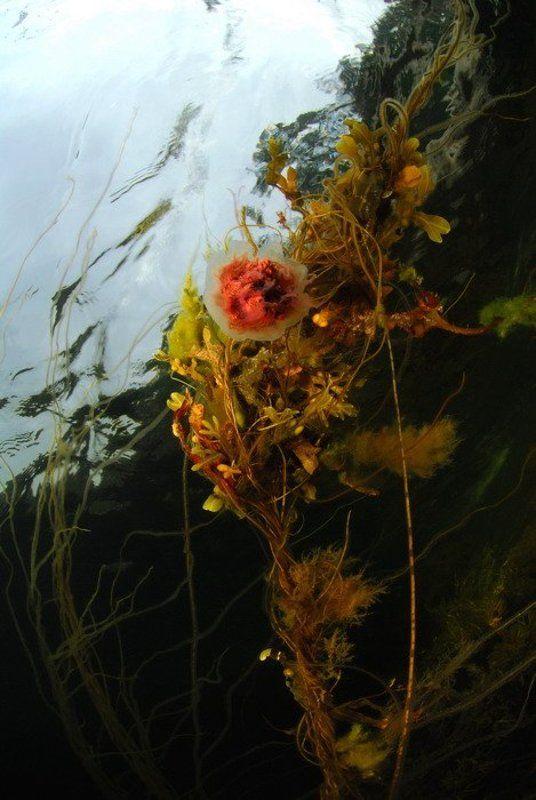 море растения медуза пейзаж Аленький цветочекphoto preview