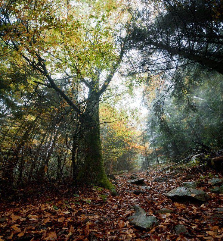 карпаты, природа, пейзаж, лес, туман, панорама лесphoto preview