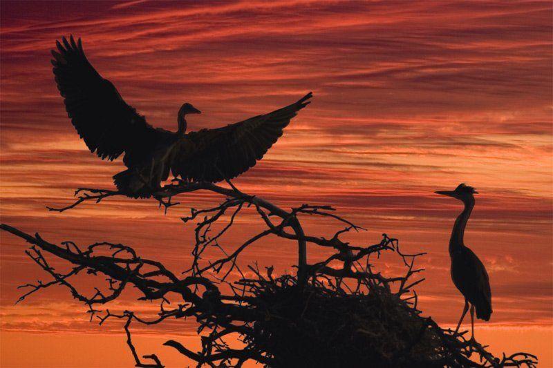 цапти, , , закат, , , птицы Танец жизни.photo preview