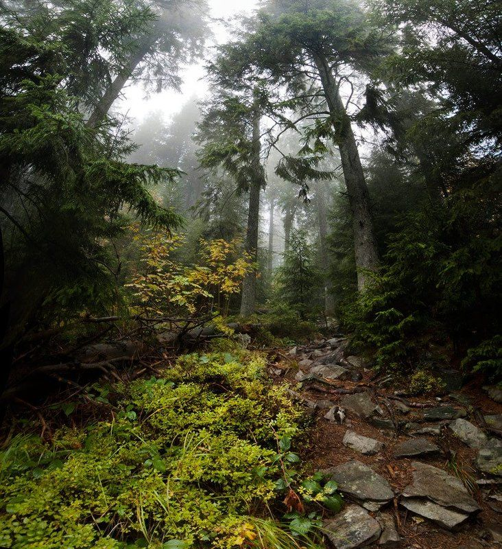 карпаты, природа, пейзаж, лес, туман, панорама глушьphoto preview