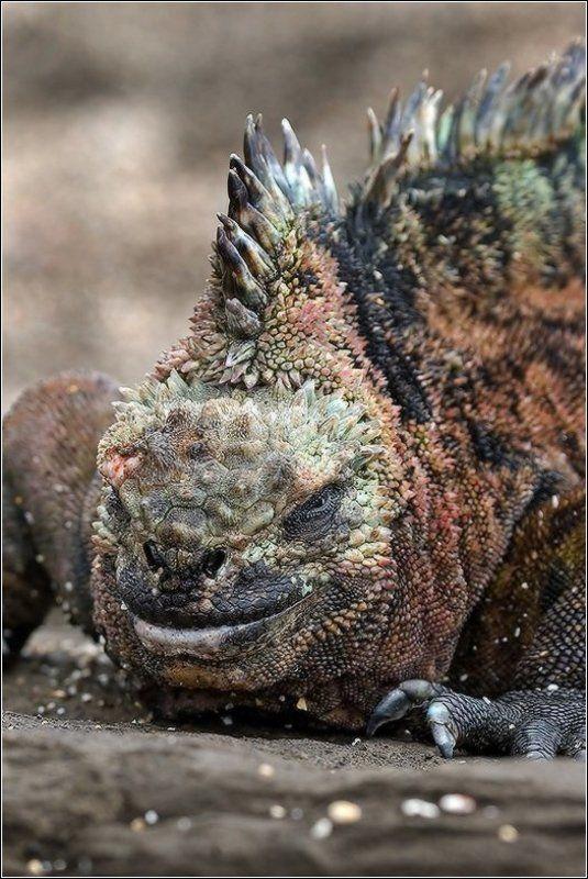 Черный дракон в карнавальном нарядеphoto preview
