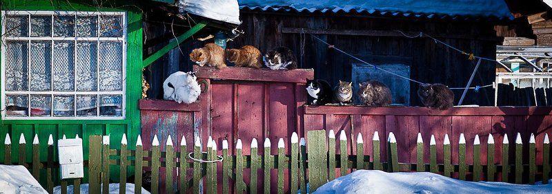 март, коты, кошка Мартовские коты. Одна на всехphoto preview