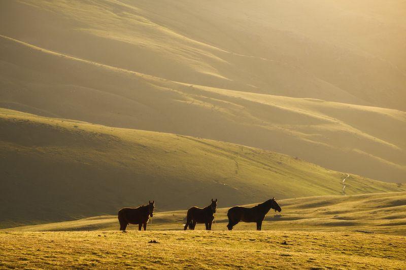 киргизия, кыргызстан, азия, горы, луг, скалы, пейзаж, весна, ущелье, джайлоо, пастбище, река, рассвет, лошадь, конь Ранний завтракphoto preview