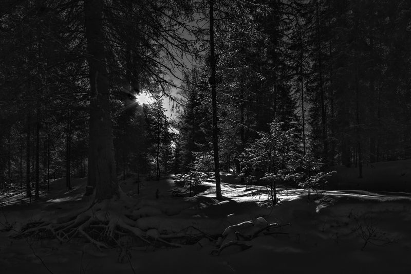 Природа, пейзаж, черно-белое фото, зима, лес, снег, свет, тени, корни дерева,  Зимний лесphoto preview