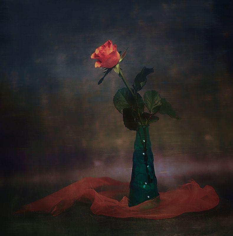 ... z różąphoto preview
