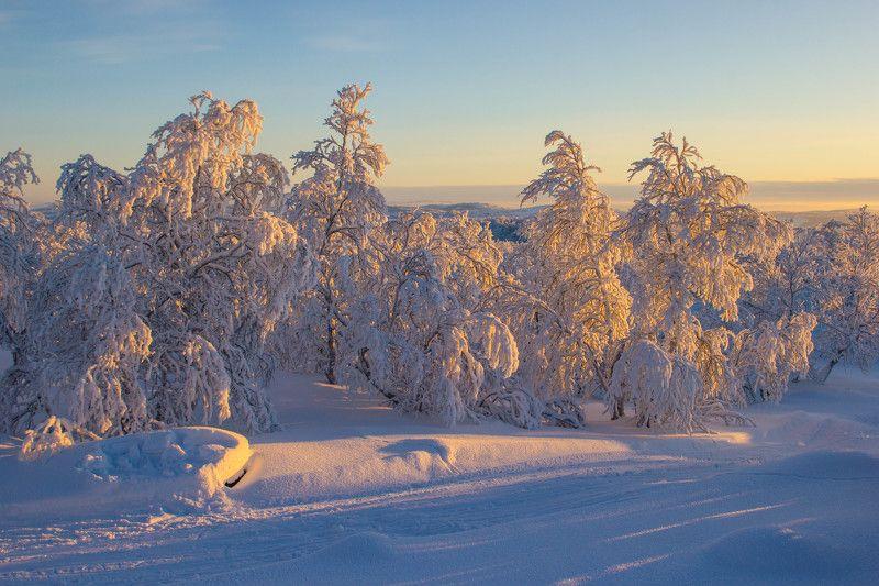 winter, пейзаж, зима, север, мороз, снег, солнце, закат, сугробы \