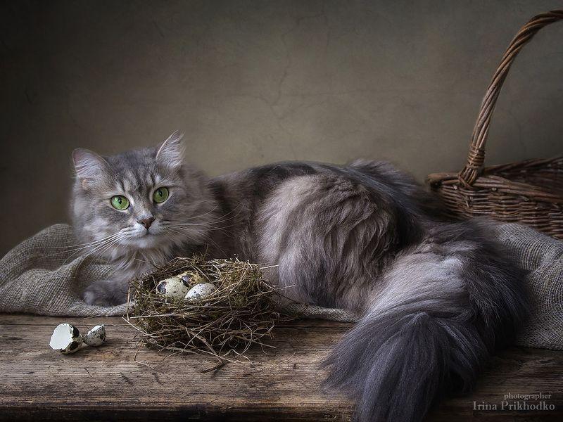 домашние животные, художественное фото, кошка Масяня, птичье гнездо, перепелиные яйца С поличным...photo preview