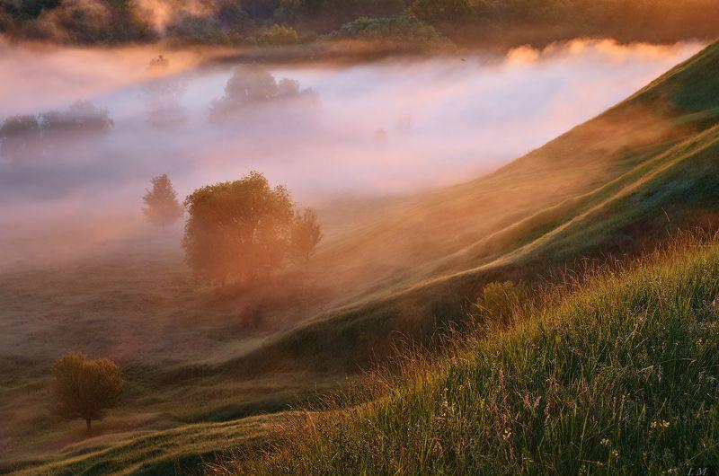 утро, туман, свет, долина, река, рассвет, лето, пейзаж, nature, light, fog, morning, sunrise, summer, grass, river, valley, foggy, misty, colors, landscape, trees Утро в долине туманов ..photo preview