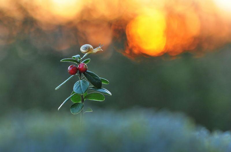 закат, улитка, лето, природа, макро Люблю закат...photo preview