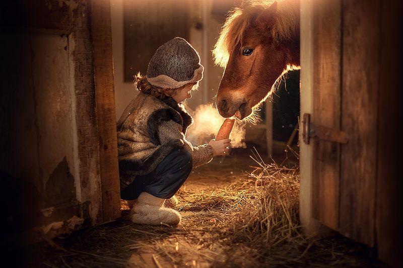 мальчик, пони, зима, конюшня, портрет, жанр Поделись морковкойphoto preview